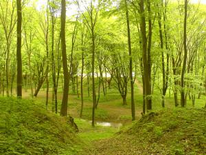 Az erdő többszörösen értékes része bolygónknak