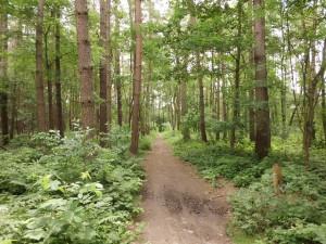 Az erdőgazdálkodás a Vidékfejlesztési Minisztérium alá tartozik